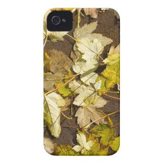 Hoogste uitzicht van bladeren van een de natte de iPhone 4 hoesje