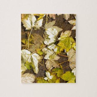 Hoogste uitzicht van bladeren van een de natte de legpuzzel