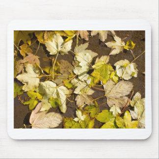 Hoogste uitzicht van bladeren van een de natte de muismat