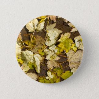 Hoogste uitzicht van bladeren van een de natte de ronde button 5,7 cm