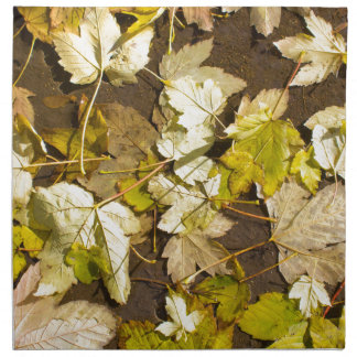 Hoogste uitzicht van bladeren van een de natte de servet