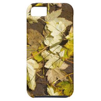Hoogste uitzicht van bladeren van een de natte de tough iPhone 5 hoesje