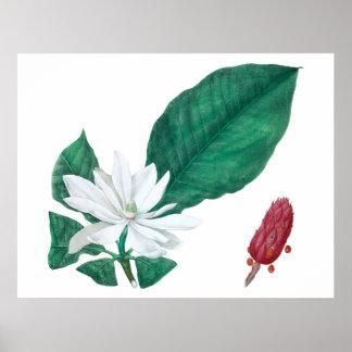 Horizontale Druk van de Bloem van de magnolia de Poster