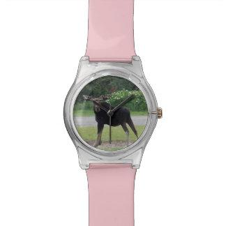 Horloge 1 van Amerikaanse elanden