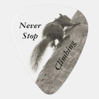 Houd nooit op beklimmend Zwart-witte Eekhoorn Plectrum
