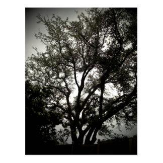 Humeurig Live Oak Briefkaart