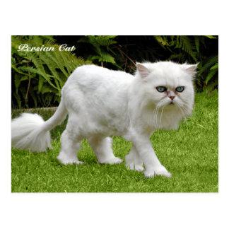 Humoristische Witte Perzische kat Briefkaart