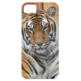Huren Tigres in Overpeinzing Barely There iPhone 5 Hoesje