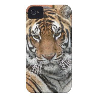 Huren Tigres in Overpeinzing iPhone 4 Hoesje