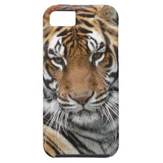 Huren Tigres in Overpeinzing Tough iPhone 5 Hoesje