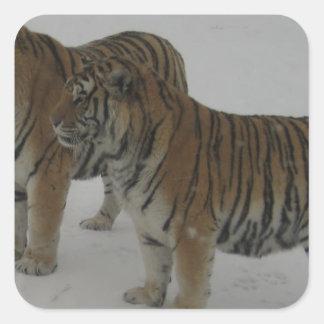 Huren Twee Siberische Tijgers Vierkante Sticker