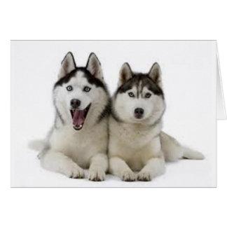Huskies Wenskaart