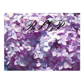 Hydrangea hortensia, RSVP Briefkaart