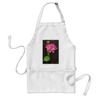 hydrangea hortensia's in bloei standaard schort