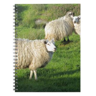 Ierse Schapen Ringband Notitieboek
