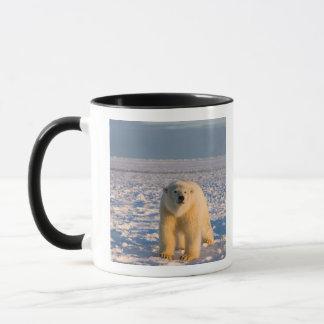 ijsbeer, maritimus Ursus, op ijs en sneeuw, Mok
