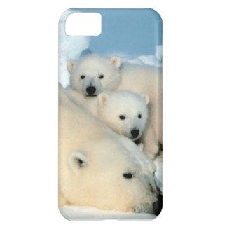 Ijsbeerwelp 1 iPhone 5C hoesje