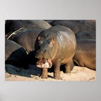 Ik wil niet aan het Portret van het Nijlpaard Poster