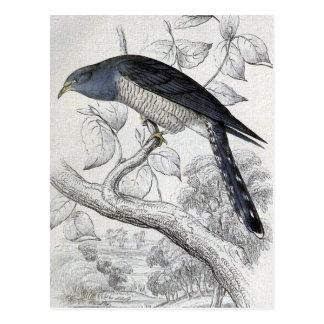 Illustratie van de Vogel van de Koekoek van Briefkaart