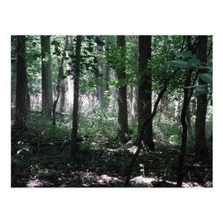 In het Bos Briefkaart