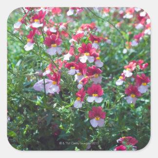 In zeldzame kleuren gekweekte gehoornde viooltjes vierkante sticker
