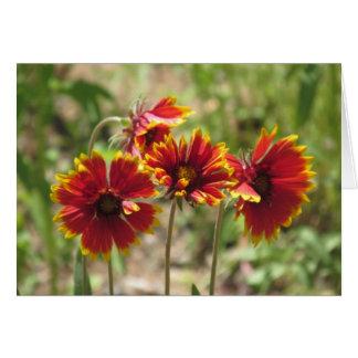 Indische Algemene Wildflowers Kaart