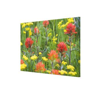 Indische penseel en biscuitroot wildflowers canvas afdrukken