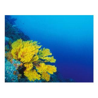 Indonesië, Banda Eilanden, vruchtbare koraalriffen Briefkaart