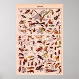 Insecten Poster