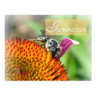 Inspiratie Echinacea en het Briefkaart van de Bij