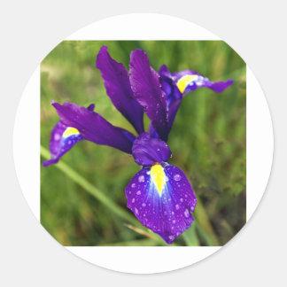 iris.jpg ronde sticker