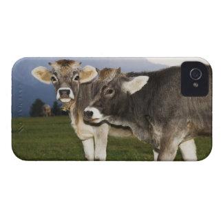 Italië, Alt Adige iPhone 4 Hoesje