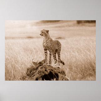 Jachtluipaard Kenia Afrika Poster