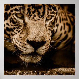 Jaguar 60.96cm x 60.96cm, het Document van het Poster