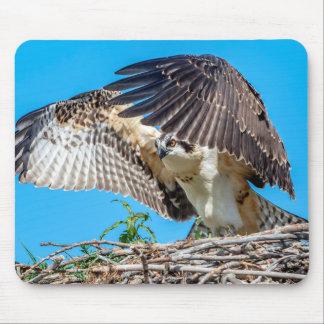 Jeugd Visarend in het nest Muismatten