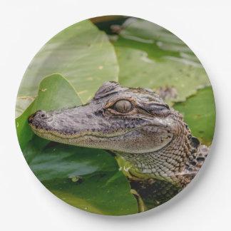Jonge Alligator Papieren Bordje