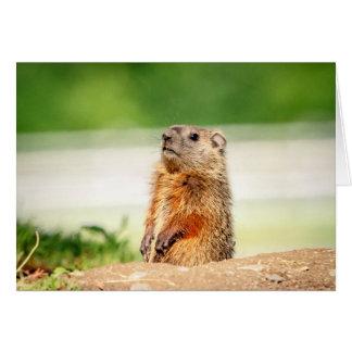 Jonge Groundhog Kaart