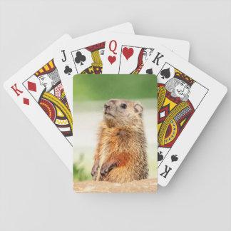 Jonge Groundhog Pokerkaarten