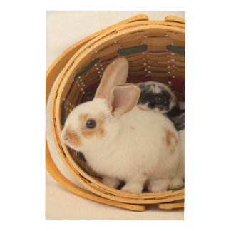 Jonge konijnen Rex in de mand van Pasen Foto Op Hout