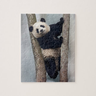 Jonge Panda die een boom, China beklimmen Puzzel