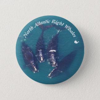 Juiste Walvissen de Noord- van Atlantische Oceaan Ronde Button 5,7 Cm