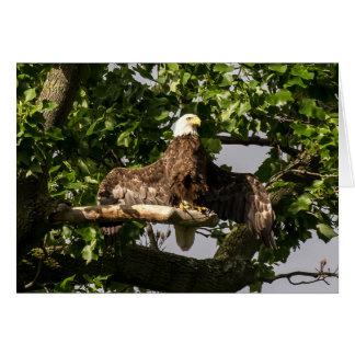Kaal Eagle, de Flitser Kaart