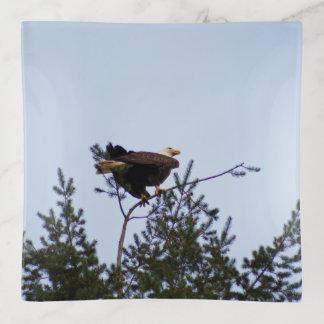 Kaal Eagle Sierschaaltjes