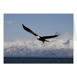Kaal Eagle tijdens de vlucht, Haliaeetus leucoceph Wenskaart