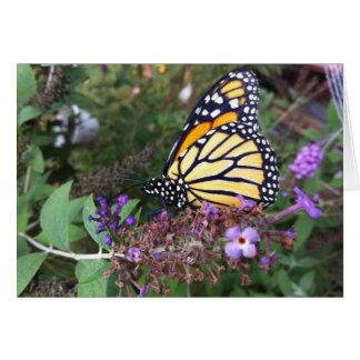 Kaart 2 van de Vlinder van de monarch