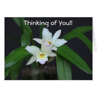 KAART - de Witte Bloemen van de Orchidee