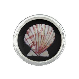 kammossel shell ring