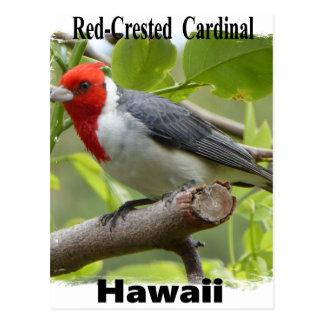 Kardinaal met rode kuif briefkaart