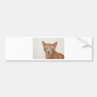 kat bumpersticker