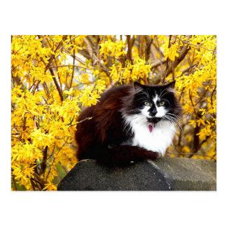 Kat door gele forsythiabloei die wordt omringd briefkaart